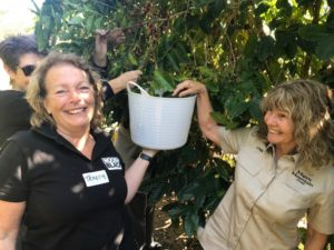 Country Noosa Local Initiatives